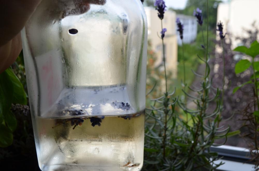 Lavendelsirup & Lavendel by Joschka Nachtschatt